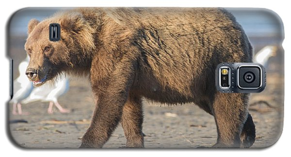 Beach Bear Galaxy S5 Case