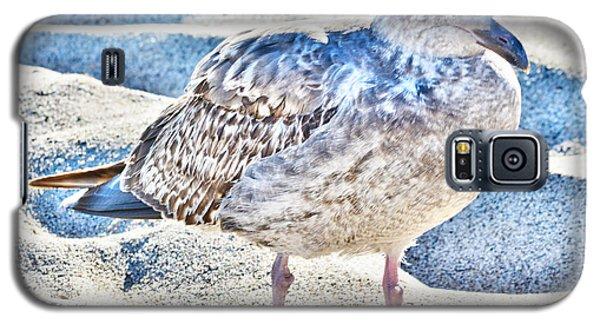 Beach Bird Galaxy S5 Case