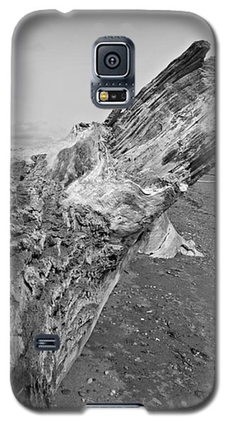 Beach Driftwood View Galaxy S5 Case