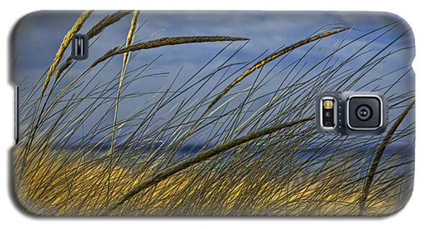 Beach Grass On A Sand Dune At Glen Arbor Michigan Galaxy S5 Case
