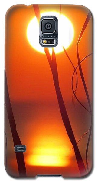 Beach Grass Sunrise Galaxy S5 Case
