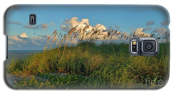 Beach Greenery Panorama Galaxy S5 Case by Bob Sample