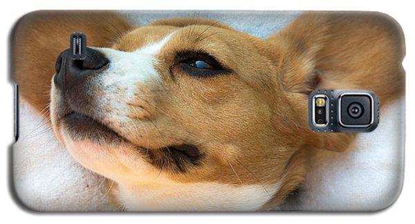 Beagles Dreams Galaxy S5 Case by Eti Reid