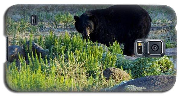 Bear 3 Galaxy S5 Case
