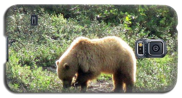 Bear At Denali Galaxy S5 Case