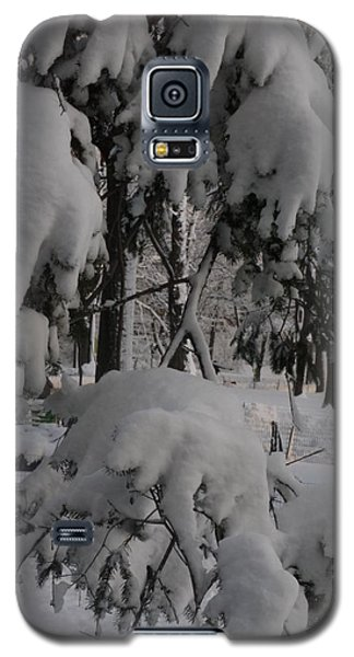 Galaxy S5 Case featuring the photograph Bear Claws by Winifred Butler