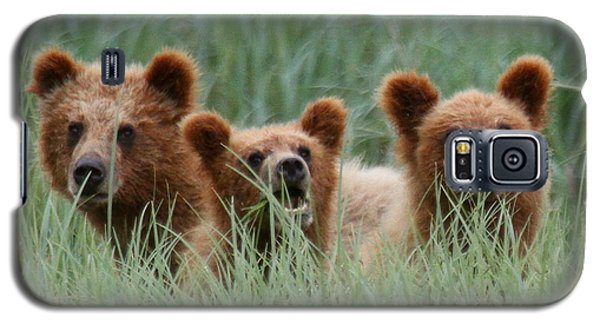 Bear Cubs Peeking Out Galaxy S5 Case