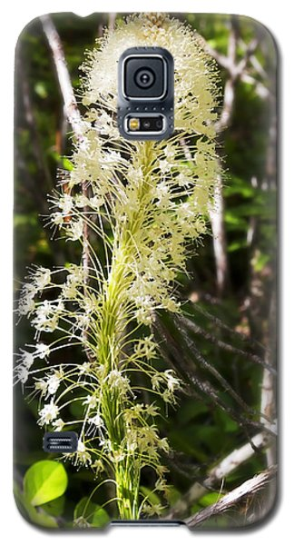 Bear Grass No 3 Galaxy S5 Case