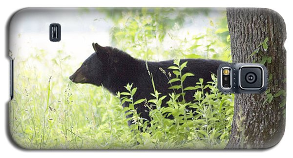 Bear In The Meadow Galaxy S5 Case