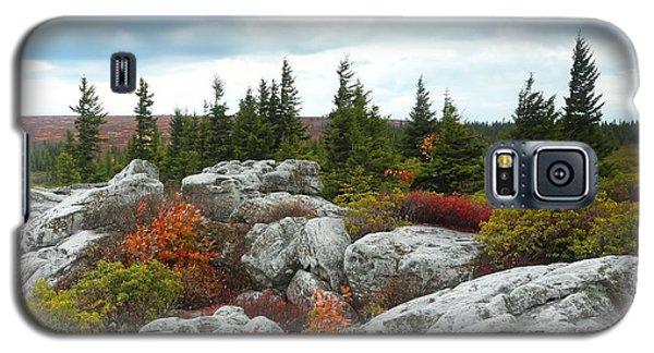 Bear Rocks Galaxy S5 Case