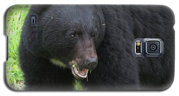Galaxy S5 Case featuring the photograph Bear by Rod Wiens