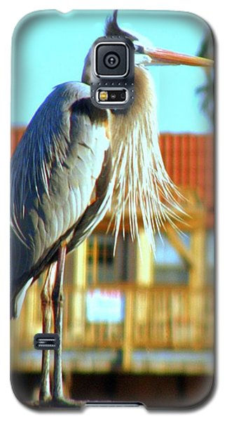 Galaxy S5 Case featuring the photograph Bearded Great Blue Heron by Antonia Citrino