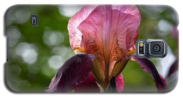 Bearded Iris Aglow Galaxy S5 Case