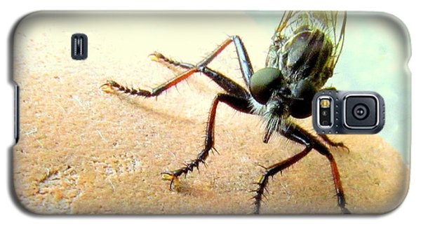 Bearded Robber Fly Galaxy S5 Case