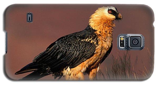 Bearded Vulture Or Lammergeier Galaxy S5 Case by Nigel Dennis