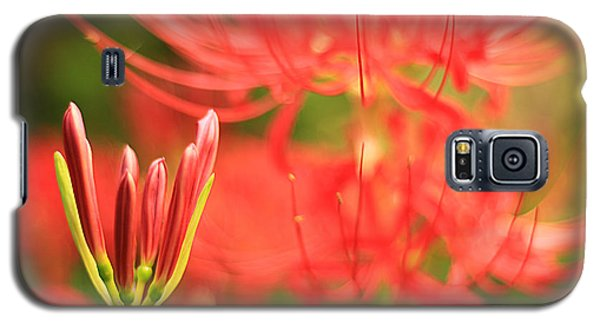 Beautiful Amaryllis Flower Red Spider Lily Aka Resurrection Lily Galaxy S5 Case
