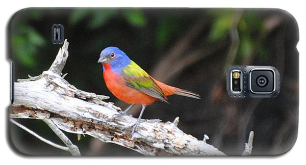 Beautiful Bird Galaxy S5 Case