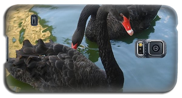 Galaxy S5 Case featuring the photograph Beautiful Black Swans by Carla Carson