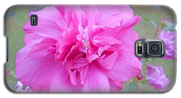 Beautiful Blooming Fuschia Rose Galaxy S5 Case by Skyler Tipton