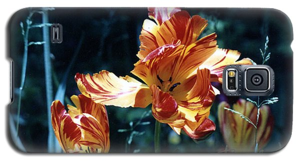 Galaxy S5 Case featuring the photograph Gorgeous Tulip by Phyllis Kaltenbach
