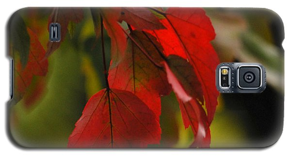 Galaxy S5 Case featuring the photograph Beautiful Branch 2 by Lena Wilhite