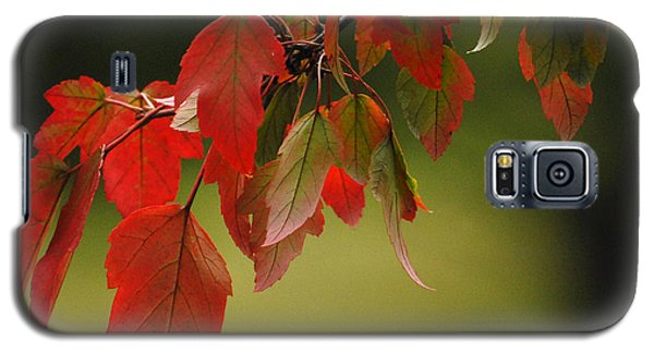Galaxy S5 Case featuring the photograph Beautiful Branch by Lena Wilhite