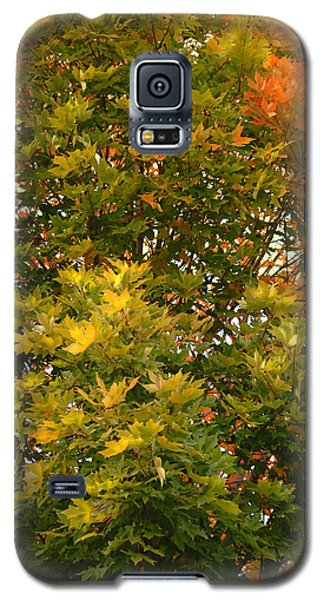 Galaxy S5 Case featuring the photograph Beautiful Branches by Lena Wilhite