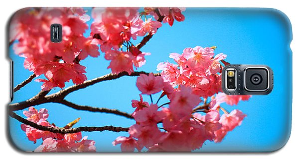 Beautiful Bright Pink Cherry Blossoms Against Blue Sky In Spring Galaxy S5 Case