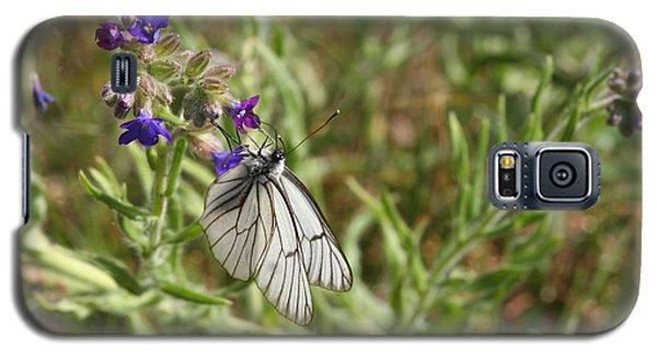 Beautiful Butterfly In Vegetation Galaxy S5 Case