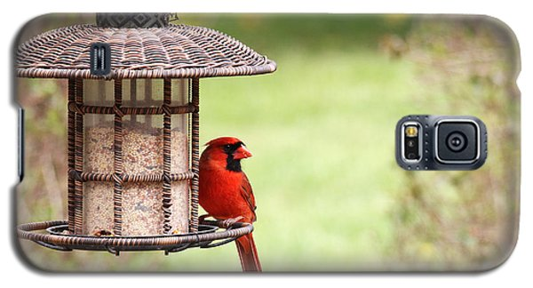 Galaxy S5 Case featuring the photograph Beautiful Cardinal by Trina  Ansel