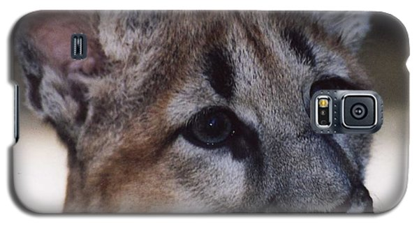 Beautiful Face-cougar Cub Galaxy S5 Case
