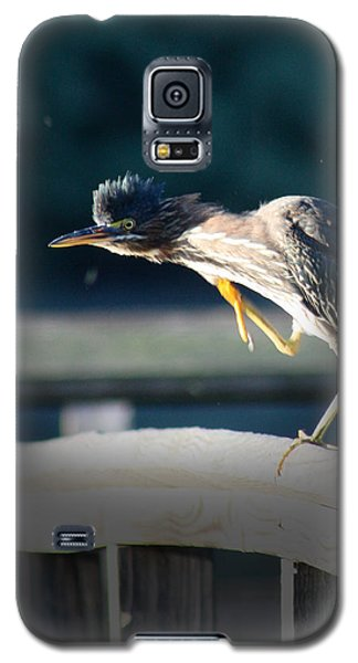 Galaxy S5 Case featuring the photograph Beautiful Green Heron by Anita Oakley