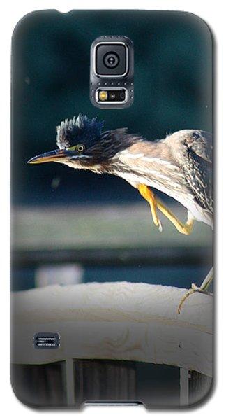 Beautiful Green Heron Galaxy S5 Case