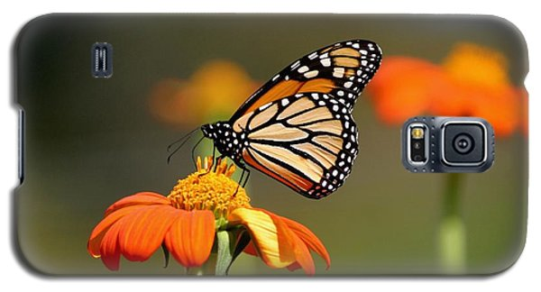 Beautiful Monarch Galaxy S5 Case by Living Color Photography Lorraine Lynch
