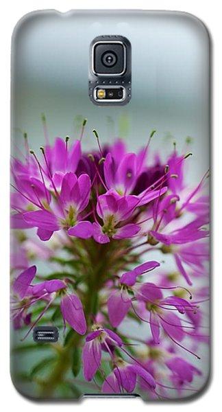 Beautiful Morning Galaxy S5 Case by Kevin Bone