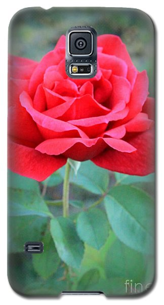 Beautiful Morning Rose  Galaxy S5 Case