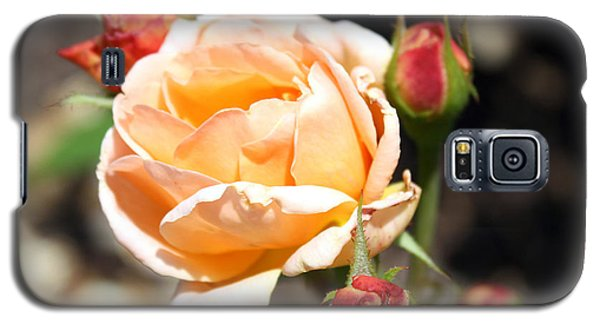 Galaxy S5 Case featuring the photograph Beautiful Peach Orange Rose by Ellen Tully