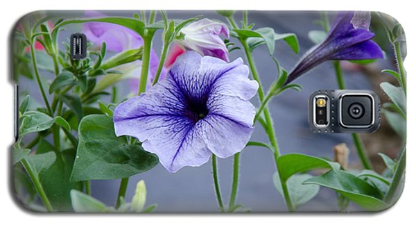 Beautiful Petunias Galaxy S5 Case by Wilma  Birdwell