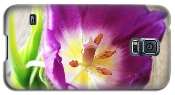 Beautiful Galaxy S5 Case - Beautiful Purple Flower From Above by Matthias Hauser