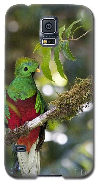 Beautiful Quetzal 1 Galaxy S5 Case