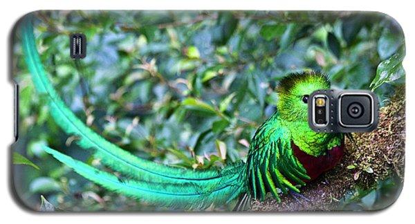 Beautiful Quetzal 3 Galaxy S5 Case