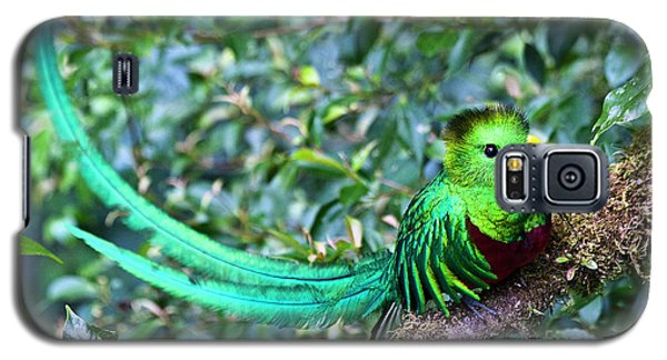 Beautiful Quetzal 3 Galaxy S5 Case by Heiko Koehrer-Wagner