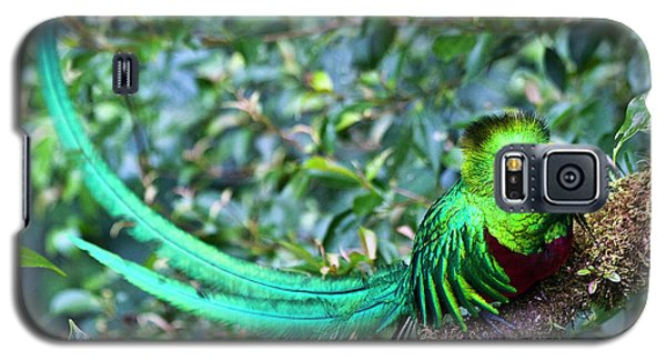 Beautiful Quetzal 3 Galaxy S5 Case