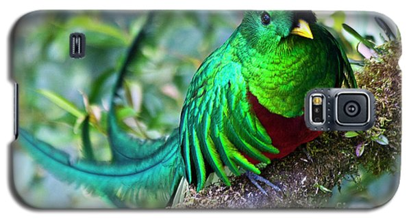 Beautiful Quetzal 4 Galaxy S5 Case by Heiko Koehrer-Wagner