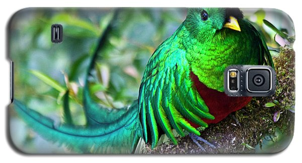 Beautiful Quetzal 4 Galaxy S5 Case