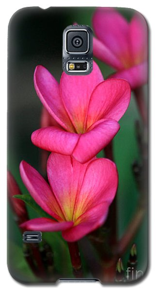 Beautiful Red Plumeria Galaxy S5 Case