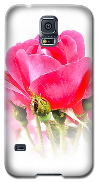 Galaxy S5 Case featuring the photograph Beautiful Rose by Anita Oakley