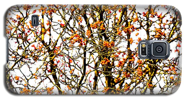 Beautiful Rowan 10 - Square Galaxy S5 Case by Alexander Senin