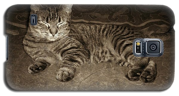 Galaxy S5 Case featuring the photograph Beautiful Tabby Cat by Absinthe Art By Michelle LeAnn Scott