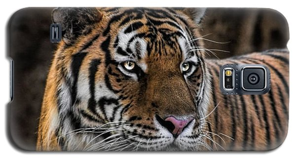 Galaxy S5 Case featuring the photograph Beautiful Tiger Photograph by Tracie Kaska